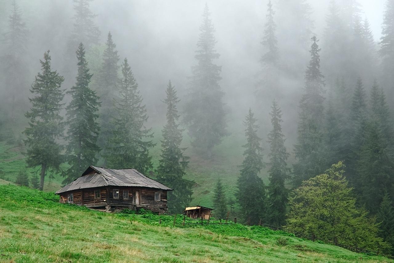 Картинка для дом в лесу