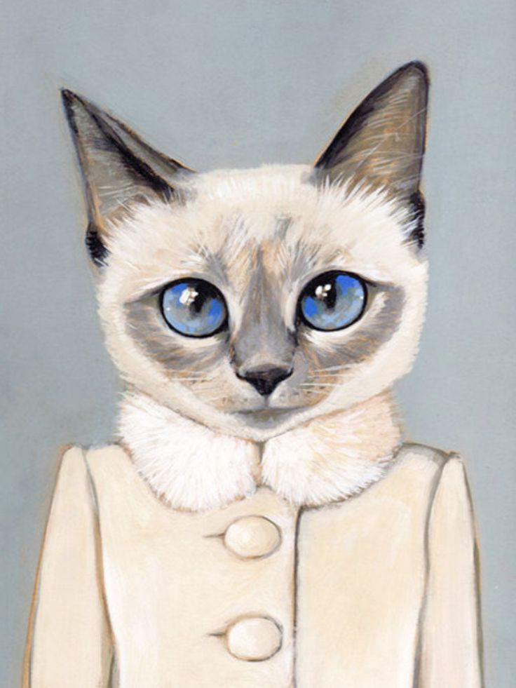 Картинка для Картинки с котиками