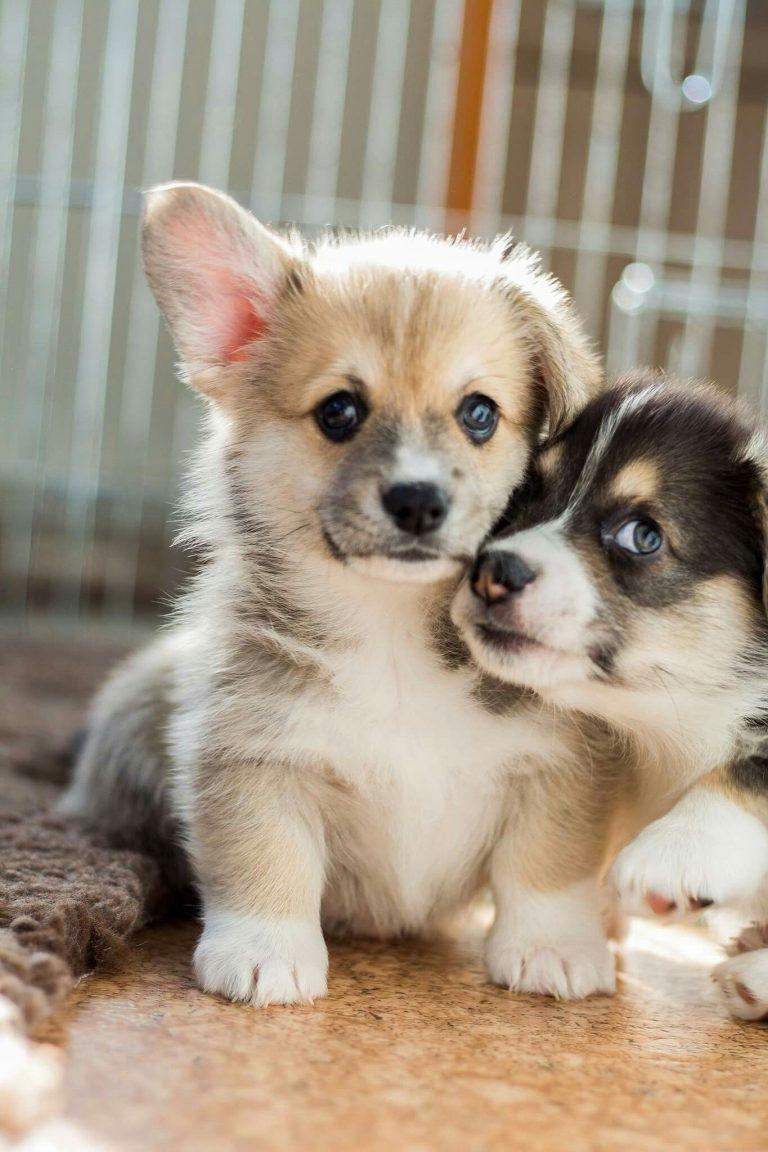 картинки с красивыми щенятами тобой