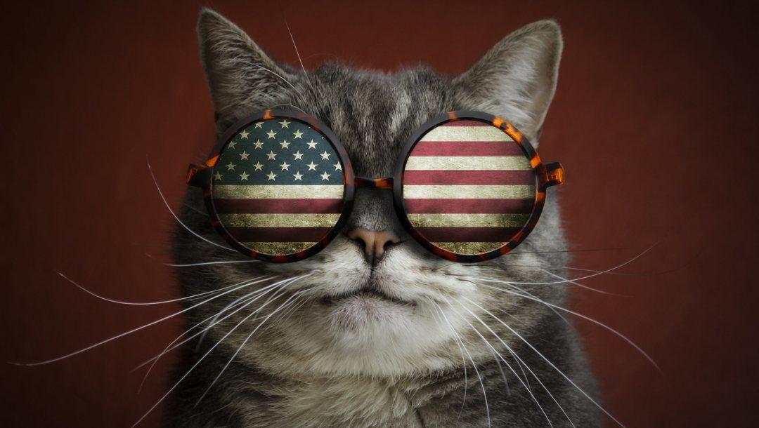 Картинки крутого кота