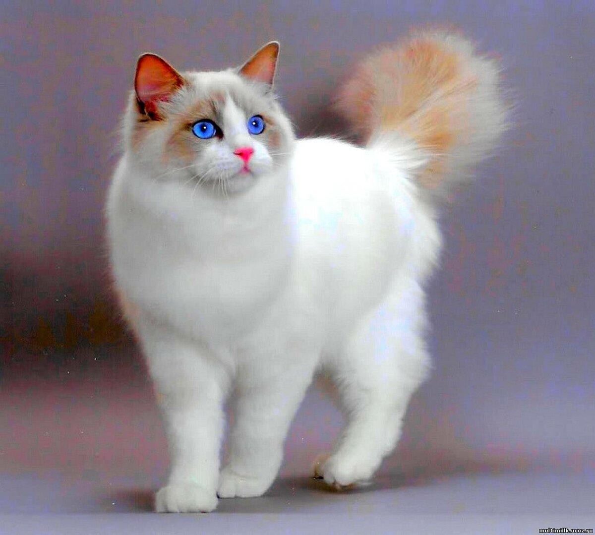 Картинка для Как хорошо ты знаешь Cat sim