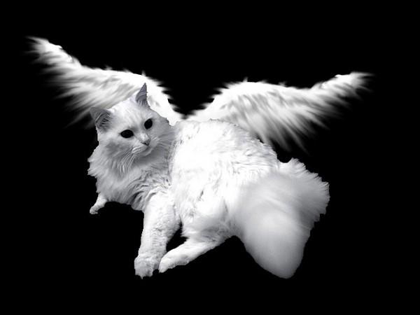 анимационные картинки котята с крыльями штативом, ещё его
