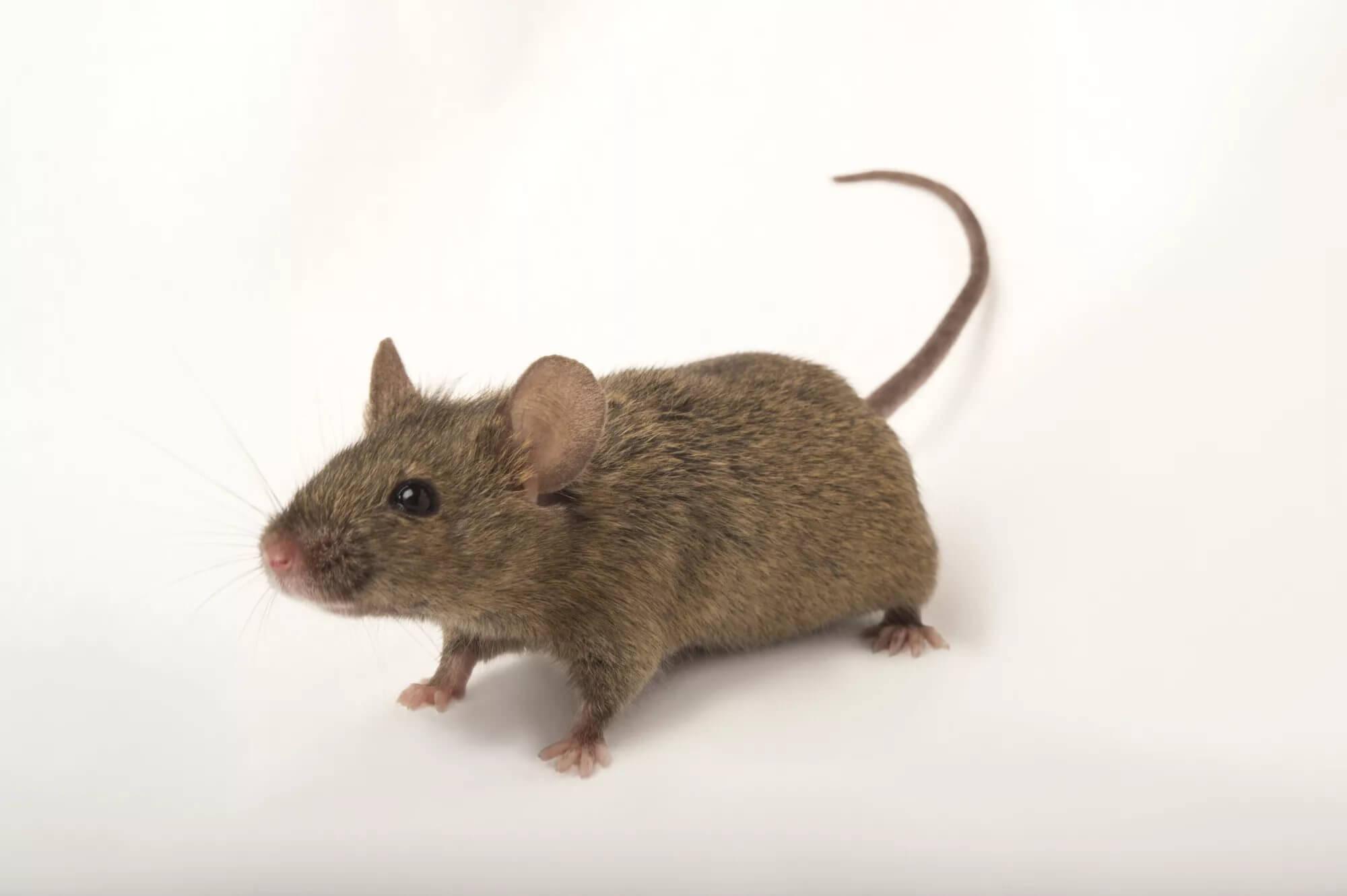 Картинка для Мышки)