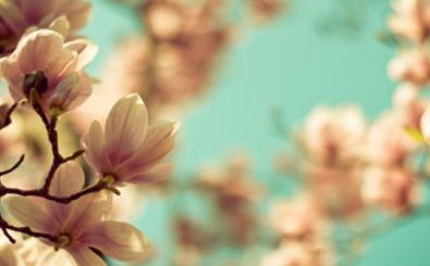 Картинка для `spring aesthetics`