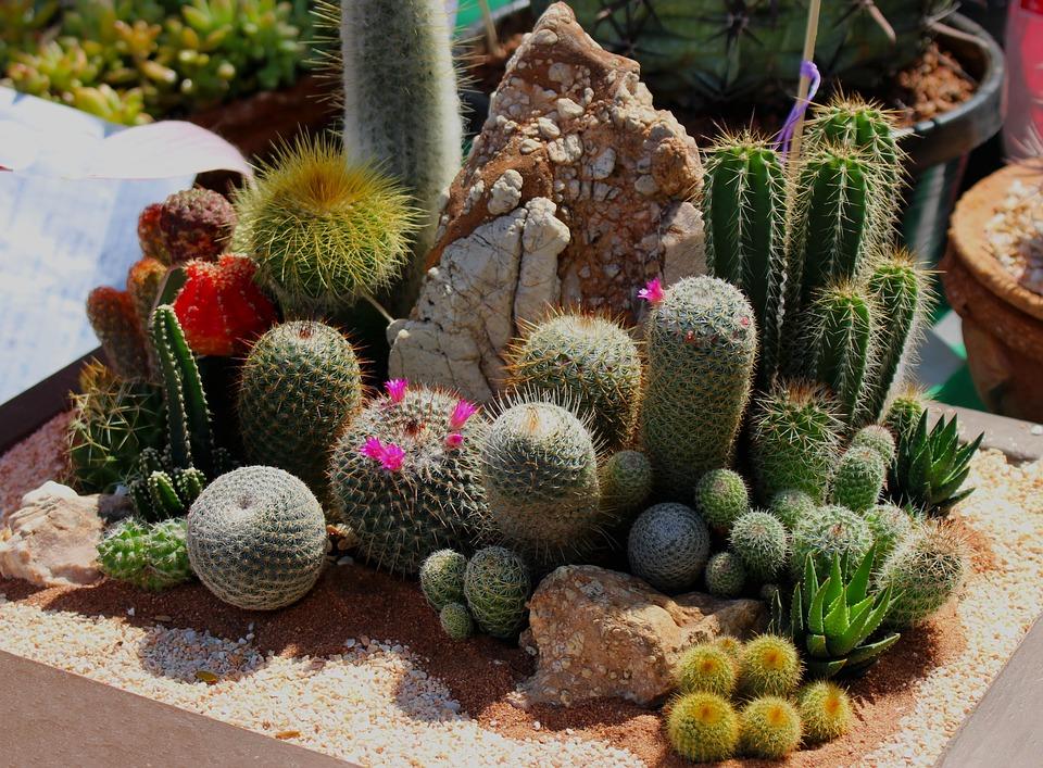 Картинки про кактусы