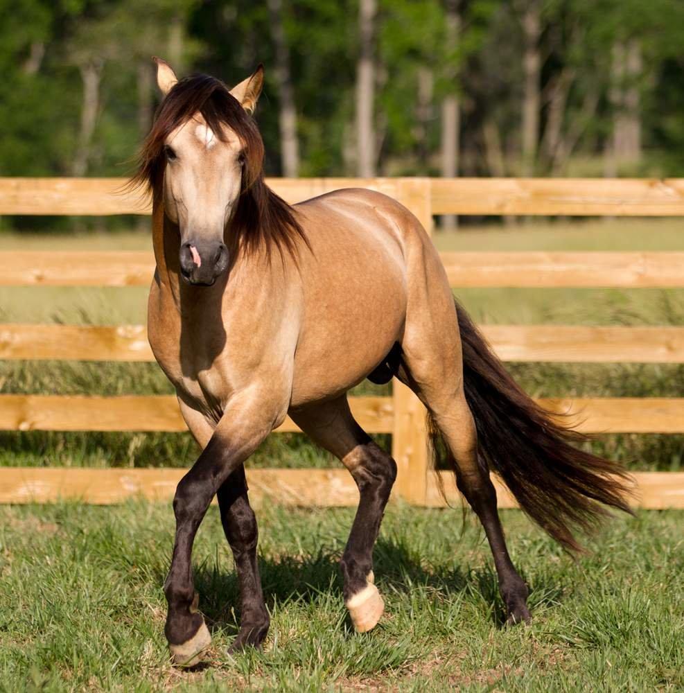 готовила картинки про породистых лошадей используют кокосовое масло