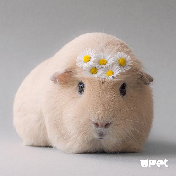 Картинка для твое мимимишное животное