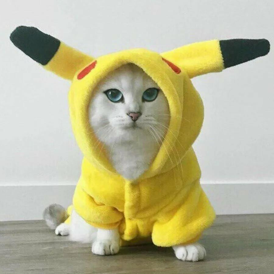 Коты в костюмах картинки