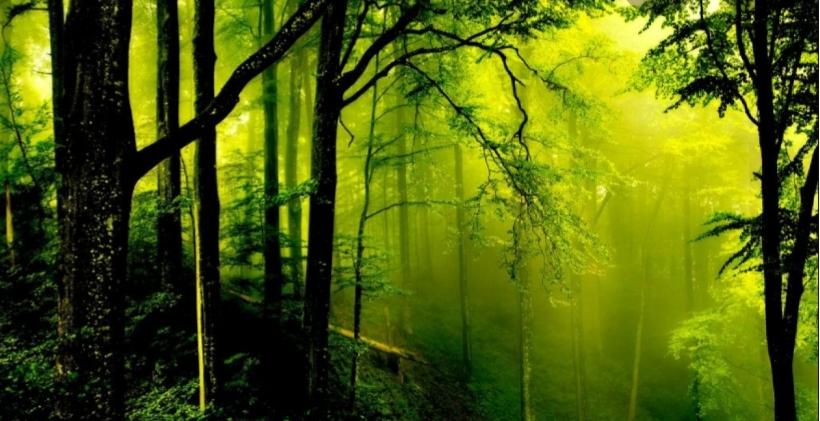 Картинка для Какое ты дерево?🌳