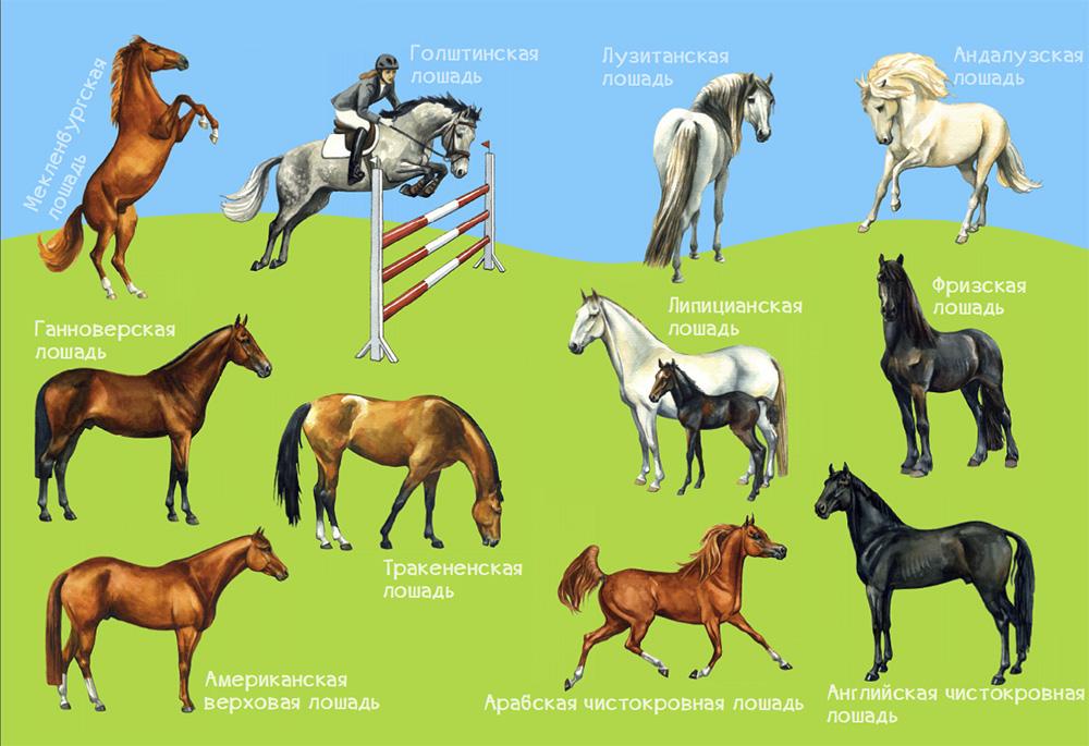 Картинка для Какая ты лошадка?