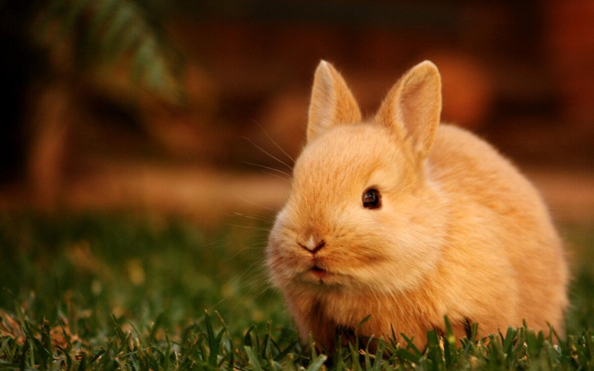 красивые кролики картинки на весь экран полотна