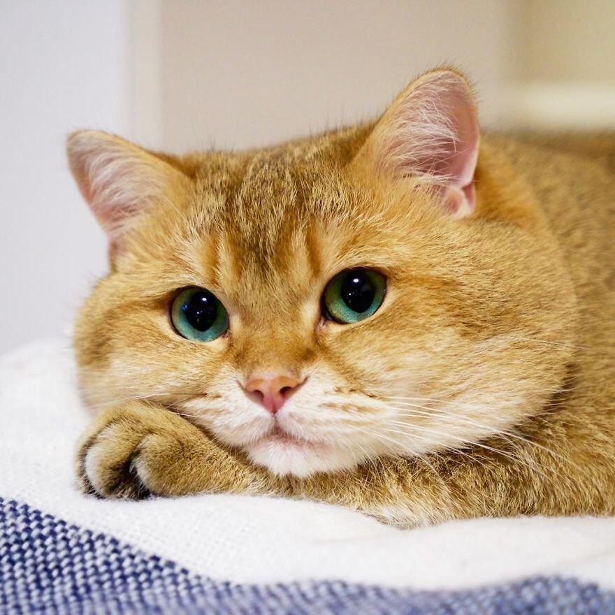 Картинка для Какой ты котэ?