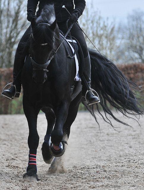 Картинка для • Кто ты в мире конного спорта? •