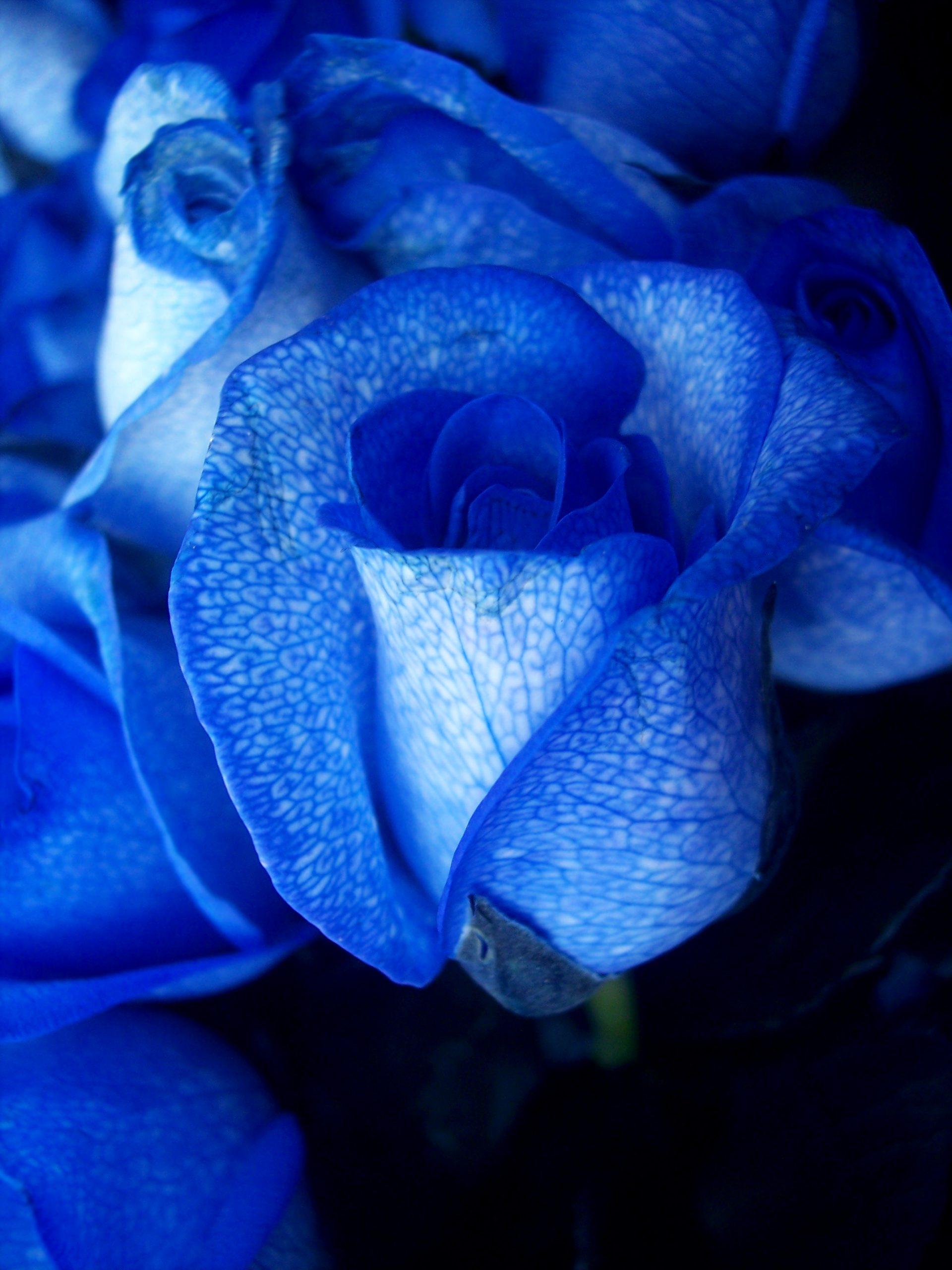 Красивый синий цвет картинки