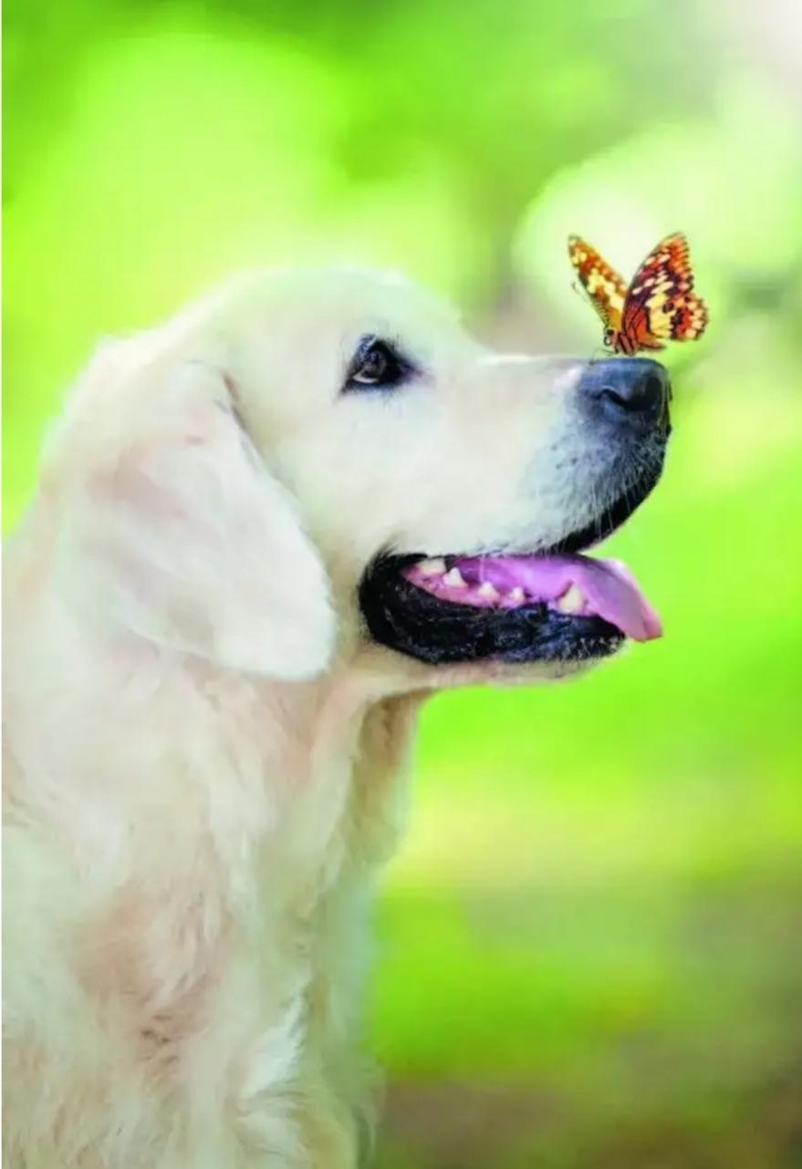 Картинка для Какая ты порода собаки по знаку зодиака? 🐶