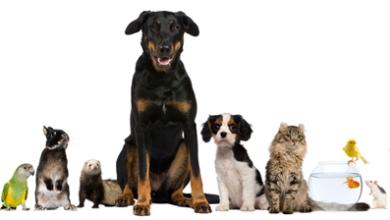 Картинка для Какое домашнее животное ближе тебе по характеру?