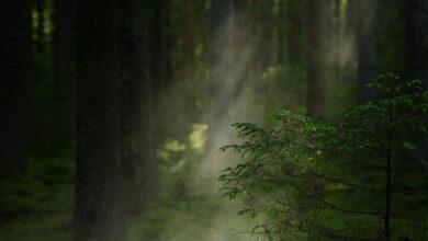 Картинка для Сказочные леса.
