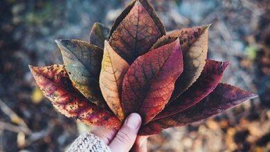 Картинка для 🍂🍁Ну, здравствуй, Осень…🍁🍂
