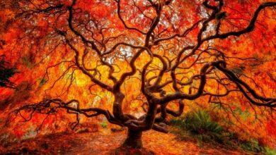 Картинка для Фотоконкурс «Красивые деревья»