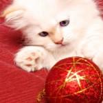 Картинка для Кошечка :)