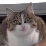 Рисунок профиля (AlphredaAlphreda)