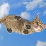 Рисунок профиля (:) Смешная котярка :))