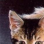 Рисунок профиля (ñè  τᏰøЯ я ✓❦)