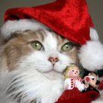Рисунок профиля (Без кота жизнь не та ツ)