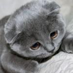 Рисунок профиля (Kitten)