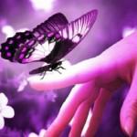 Рисунок профиля (♥♥♥Ночная бабочка♥♥♥)