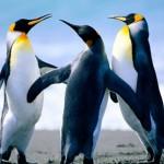 Рисунок профиля (Пингвинчик)