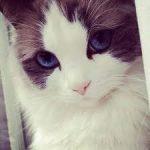 Рисунок профиля (Милый котик)