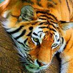 Рисунок профиля (marochka)