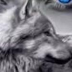 Рисунок профиля (волчица)