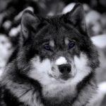 Рисунок профиля (_Волкодиченька_)