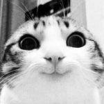 Рисунок профиля (Яростный котенок)