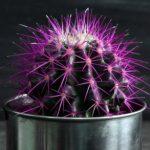 Рисунок профиля (Лиловый кактус)