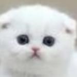 Рисунок профиля (Princess 2501/ Принцесса кошка амбиверт/Полинака)