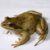 Рисунок профиля (froggie)