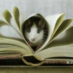Рисунок профиля (ⓡⓐⓣⓣⓘⓔ||Крысики как смысл жизни||鼠標||)