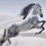 Рисунок профиля (Love🐴 horse!)