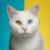 Рисунок профиля (Unique_Cat)