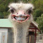 Картинка для Веселый страус|||не обижайте гусениц