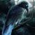 Рисунок профиля (Наттравн  Ночной ворон)