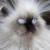 Рисунок профиля (prosto_chelovek)