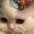 Рисунок профиля (Blink)