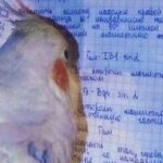 Рисунок профиля (Кеси Лорин)