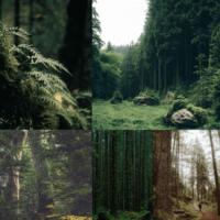 • прогулка по лесу • а почему бы и нет?