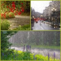 Дождь, лес: вот и идеал весь)