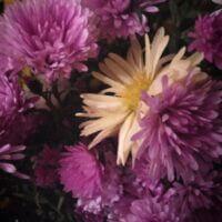 Цветы - самый красивый дар природы...